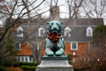Princeton Tiger at Christmas
